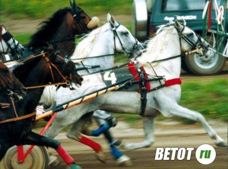Лошади + Ставки = Выигрыш